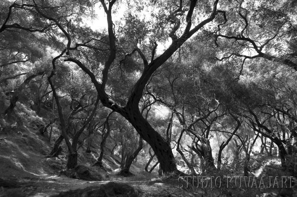 Mystinen metsä