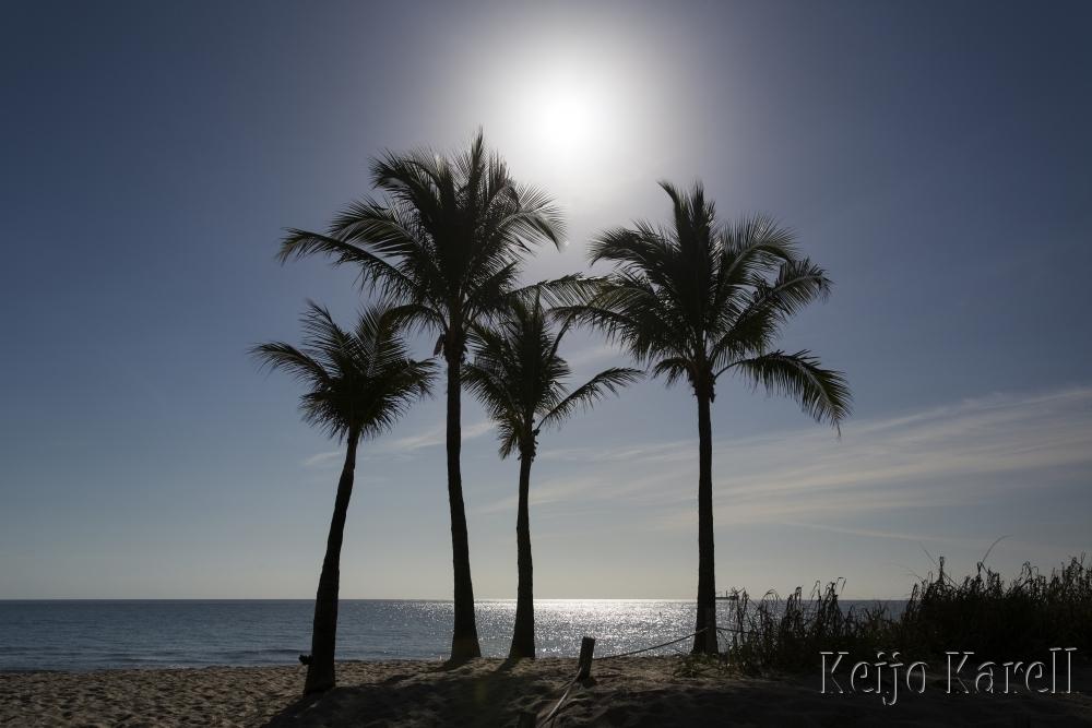 Palmut rannalla