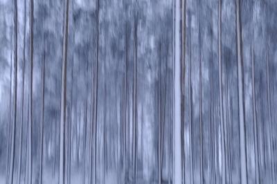 Metsä vastaa