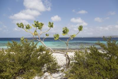 Rantamaisema Bonairessa