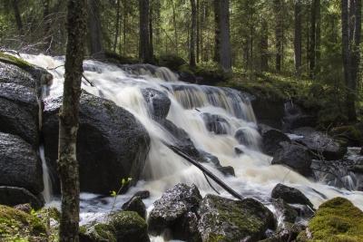 Vesiputous metsäpurolla