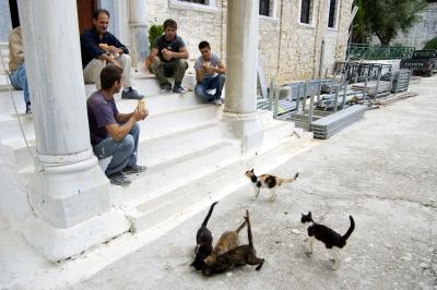 Luostarin kissat