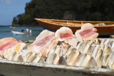 Simpukat St Lucialla