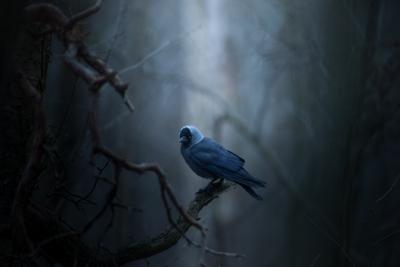 Metsän vartija