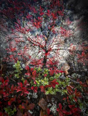 Riekonmarjapuu
